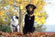 Antje s HundeQuartier am Jura