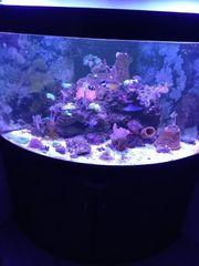 Meerwasser Fische Korallen