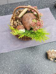Herbstdeko Betondeko Gartendeko Unikat