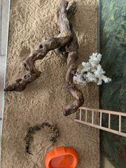 Geckos Terrarium zu verkaufen