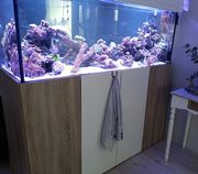 Meerwasseraquaristik Raumteiler