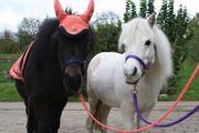 Reitbeteiligung auf kleinem Pony für