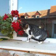 Jayna Katze aus dem Tierschutz