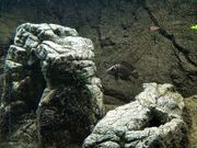 Aquarium komplett mit Unterschrank und