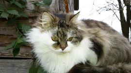 Katze vermisst: Kleinanzeigen aus Schwarzach - Rubrik Entlaufen, Entflogen