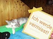 Gisela in Feldkirch vermisst