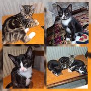 Baby Katzen Kitten suchen ein