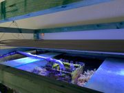 Aquamedic Aquasun Led Meerwasser Lampe