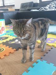 Katzenbetreuung gesucht