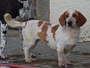 Katzenliebe kastrierte Daisy in Haigerloch