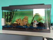80 Liter Aquarium inklusive Eheim