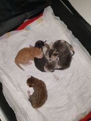 Babykatzchen