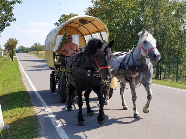 Ständig Fahr-u Freizeitpferde