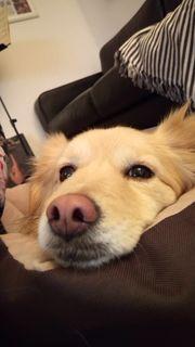liebevolle Individuelle und zuverlässige Hundebetreuung