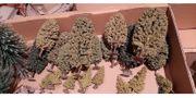 Märklin H0 - Modellbau Bäume