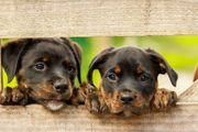 Hundetraining selbst gemacht