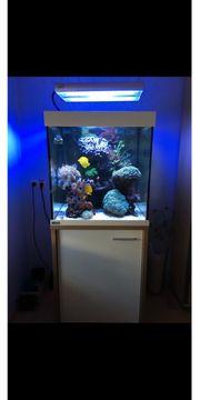 Meerwasseraquarium Eheim Scubacube 270