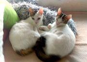 Kätzchen Funny und Pam 8