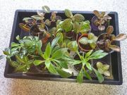 verschiedene Arten getopfte Pflanzen für