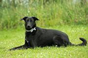 Kluger Hund sucht seine Familie