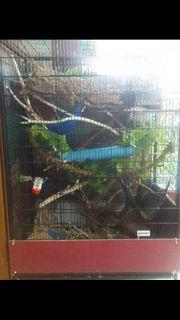 Nagerkäfig für Ratten Degus Frettchen