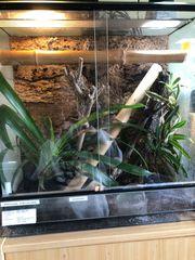 Phelsuma nigristriata Terrarium