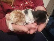 flaschen Kitten bald neues zuhaus