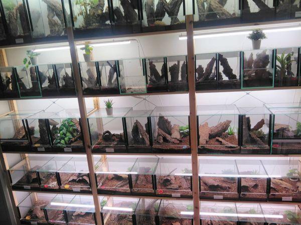 Vogelspinnen und Skorpione zu Verkaufen
