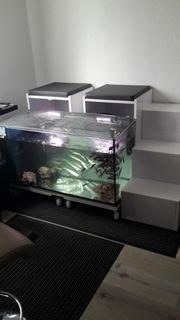 Fish Spa Wellnessstation Knabberfische Garra
