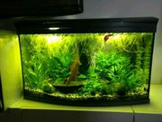 Tetra AquaArt Aquarium 100 Liter