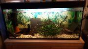 Süßwasseraquarium abzugeben