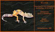 süßer Leopardgecko Nachwuchs