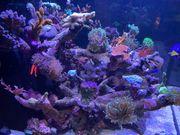 Meerwasseraquarium komplett Auflösung