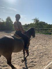 Suche Reitbeteiligung-Reiterin sucht Pferd