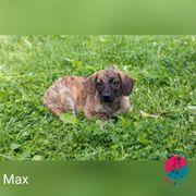 Max- wer kann da widerstehen