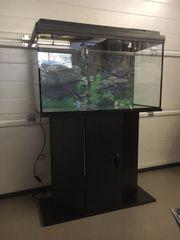 Aquarium Professionel 126 Liter