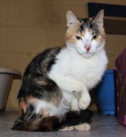LIMON NARANJA - Liebenswertes Katzenduo sucht