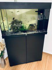 Aquarium juwel 125l mit Garantie