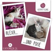 Kätzchen Alexa und Pixie warten