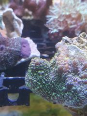 Korallen Anemonen und Fische Meerwasser