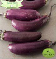 BIO- Saatgut Italienische Aubergine Lila