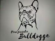 Frau sucht Französische Bulldogge Rüde