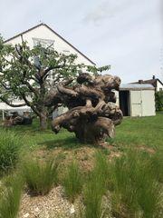 Holzskulptur aus Nussbaumholzkrone