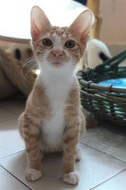 Freundlicher Katzenjunge Aramis möchte seinen