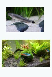 2 Neon Fische und ein