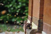Bienenvolk Bienen Bienenvölker