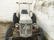 Massey Ferguson Oldtimer Traktor