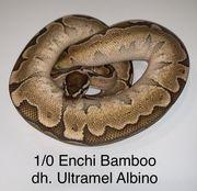1 0 Enchi Bamboo dh