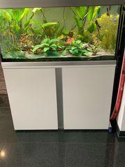 Aquarium mit Unterschrank 250L