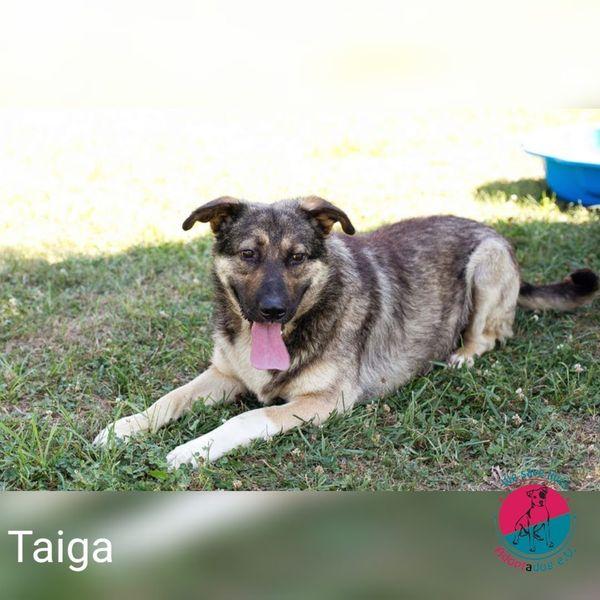 Taiga - 4 weiße Pfoten suchen